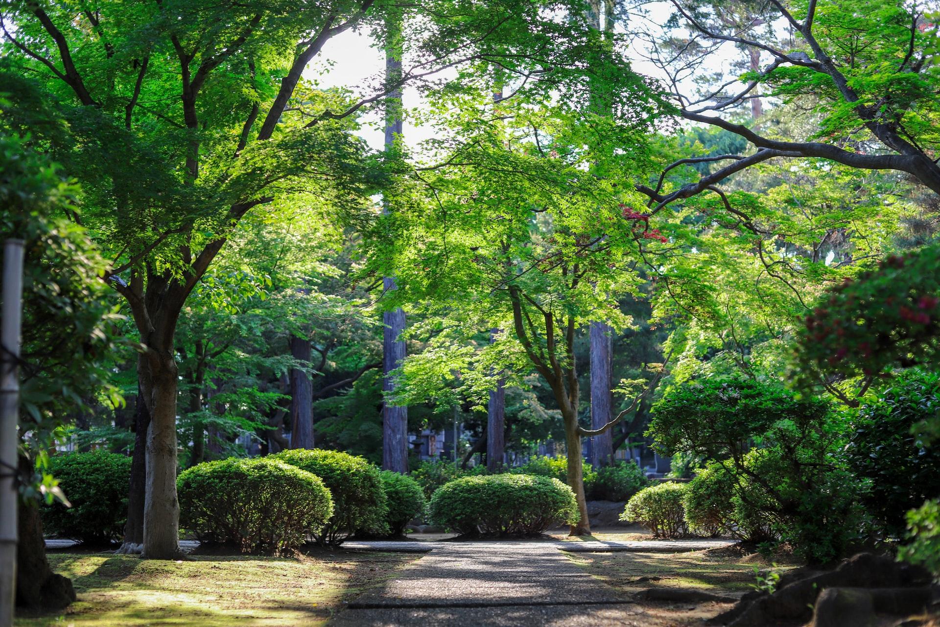 grote tuin inrichten