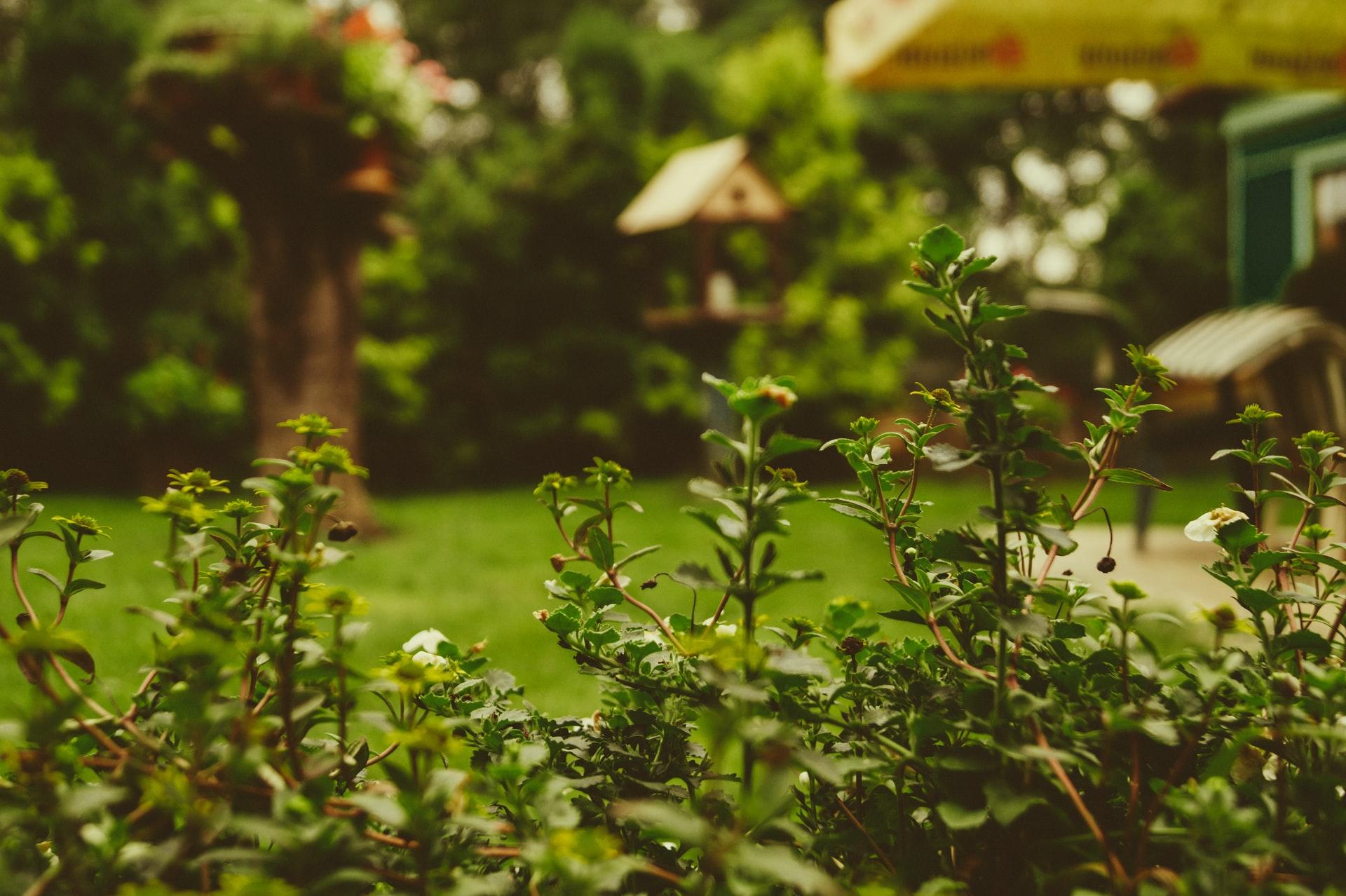 wat doet een tuinarchitect