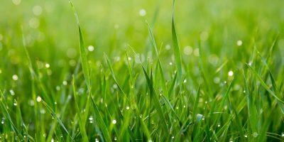 automatische grasmaaier